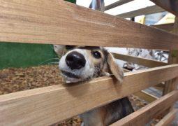 Jefatura de Bienestar Animal del Municipio de Guayaquil ha rescatado y puesto en adopción a decenas de perritos y gatos de la ciudad